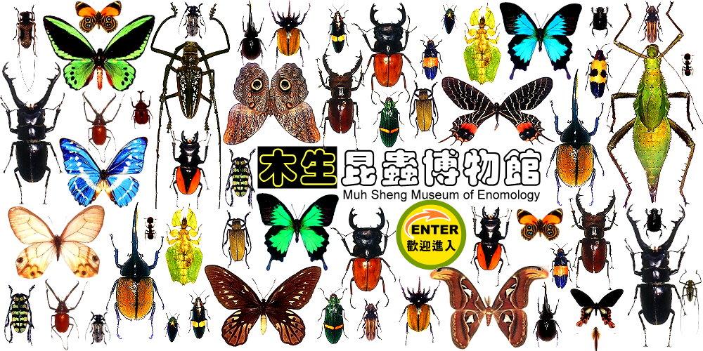 埔里木生昆蟲博物館