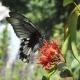 鄰里蝴蝶棲地營造活動 打造埔里後花園