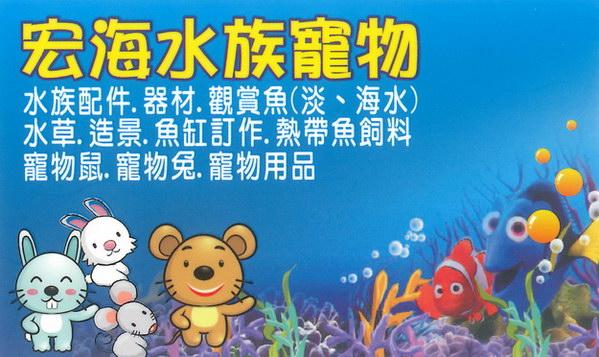 埔里宏海水族寵物-埔里-宏海水族館-水族館-觀賞魚-寵物鼠-寵物兔