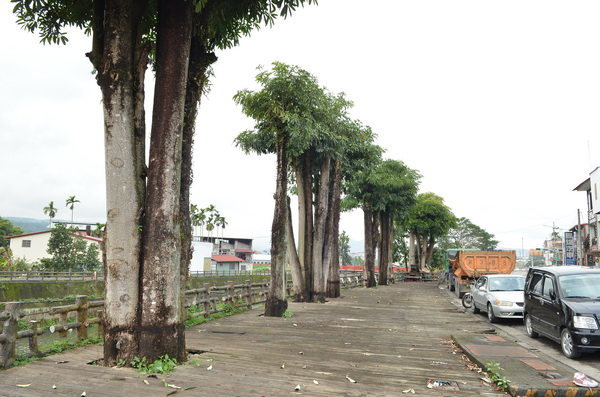 埔里-黑板樹