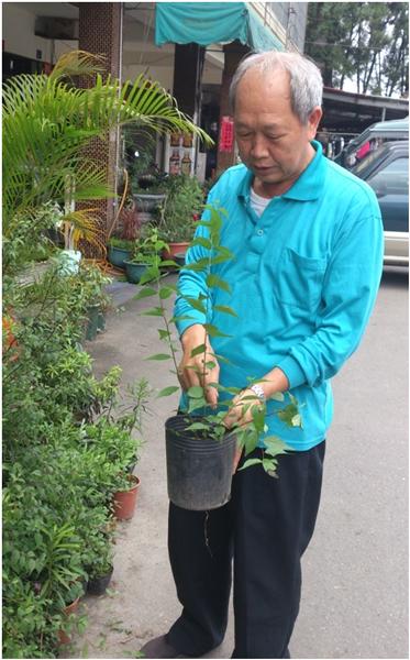埔里-園藝